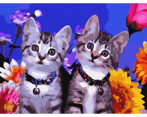 Ciekawość kotków