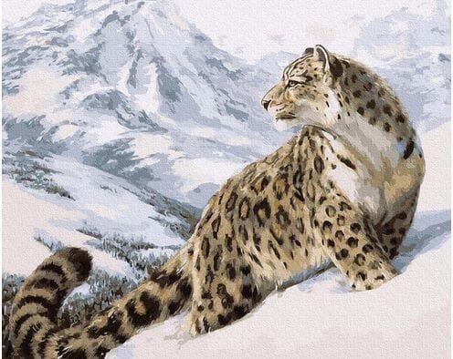 Pantera Śnieżna - Irbis