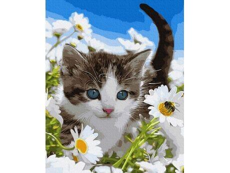 Kotek w polu rumianków