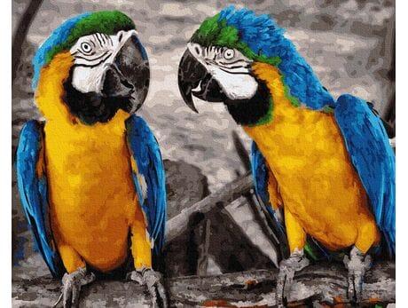 Brazylijska Modroara malowanie po numerach