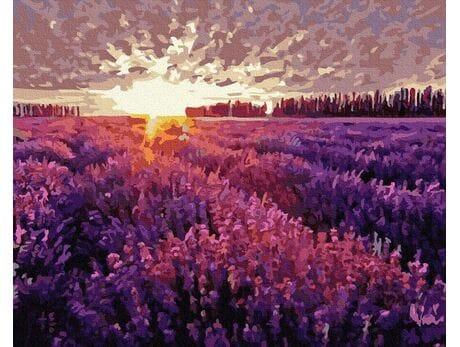 Zachód słońca nad polem lawendy