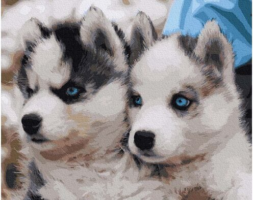 Słodkie husky