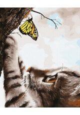 Kotek i motyl