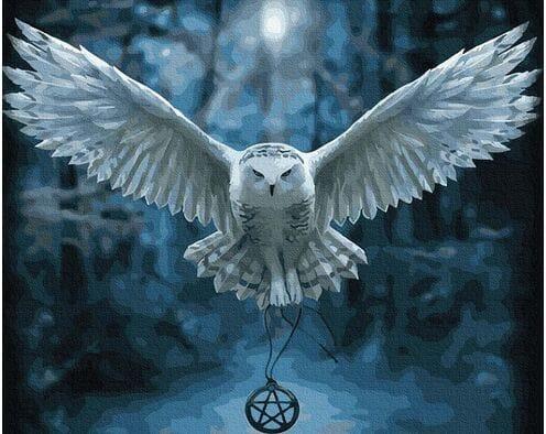 Szerokie skrzydła nocy