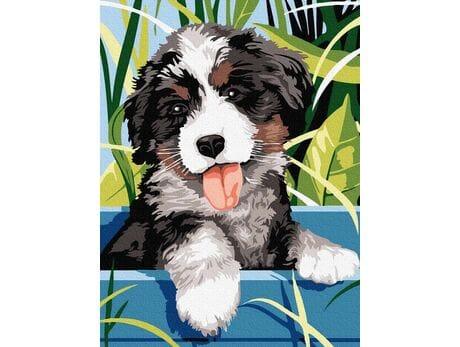 Piękny Berneński Pies Pasterski