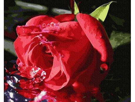 Delikatny pąk róży malowanie po numerach