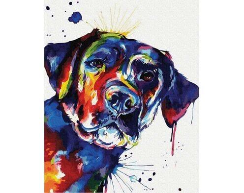 Kolorowy pies
