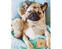 Roztańczony Pug