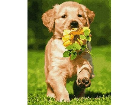Pies z kwiatkiem malowanie po numerach