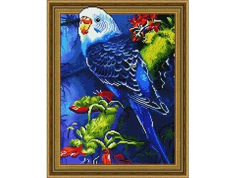 Papużka falista diamentowa mozaika