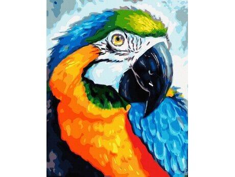 Tęczowa papuga malowanie po numerach
