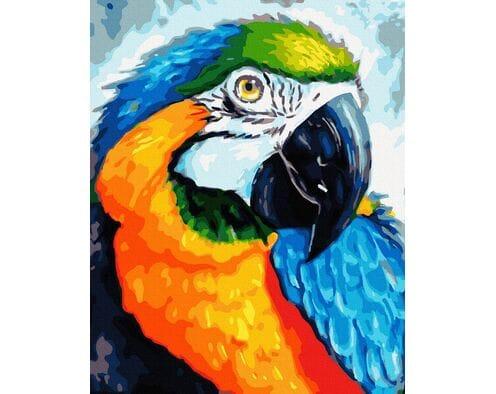 Tęczowa papuga