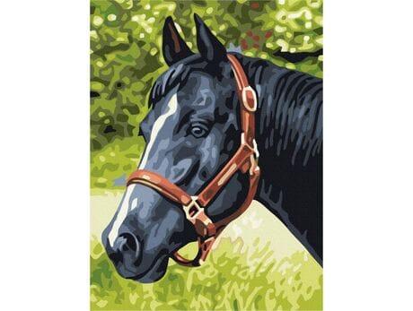Kary koń malowanie po numerach
