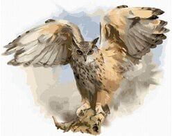 Sowa rozłożyła skrzydła