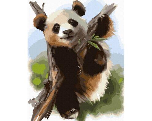 Niedźwiadek bambusowy