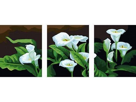 White Calla malowanie po numerach